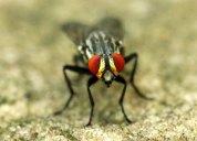 Insecto2.Darío Duarte C.