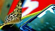 Mariposa. Aníbal Ovelar